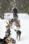 Husky Photo Prints - Bill Pinkham On The Trail In A Heavy Print by Jeff Schultz