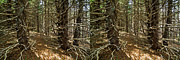 Matt Molloy - Billions of Branches