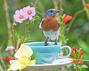Luana K Perez - Billy Bluebird Having Tea