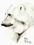 Polar Drawings Prints - Binky Print by Bob Patterson