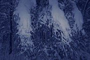Snowy Night Night Photo Prints - Birch branches laden with snow Print by Intensivelight