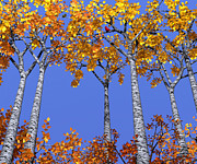 Fall Leaves Digital Art Prints - Birch Grove Print by Cynthia Decker