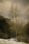 Hugo Bussen - Birch tree in winter...