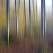 Surrealism Photo Metal Prints - Birch trees. Abstract. Blurred Metal Print by Bernard Jaubert