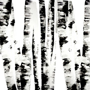 Black-and-white Digital Art Metal Prints - Birch Trees Metal Print by Budi Satria Kwan