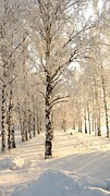 Landscape Painting Originals - Birch trees in the winter by Zulfiya Stromberg