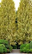 Corinne Rhode - Birch Trees in Tokyo