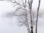 Canadian Nature Scenery Prints - Birch trees over misty white lake nature scenery Print by Oleksiy Maksymenko