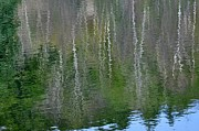 Phyllis Meinke - Birch Trees Reflected in...