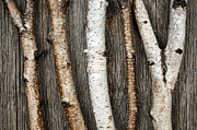 Rustic Photo Metal Prints - Birch trunks Metal Print by Elena Elisseeva
