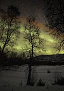 Pekka Sammallahti - Birches and Northern...