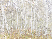 Susan Crossman Buscho - Birches in Colored Pencil