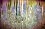 Silvia Ganora Art - Birches reflections 3 by Silvia Ganora