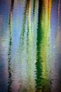Silvia Ganora Art - Birches reflections II by Silvia Ganora