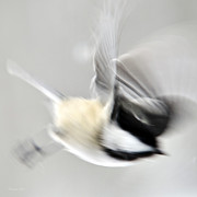 Impressionistic Digital Art - Bird Abstract Motion Blur by Christina Rollo