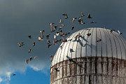 Silos Metal Prints - Bird - BIRDS Metal Print by Mike Savad
