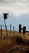 Barbed Wire Fences Prints - Bird Box and Fenceline Print by CMS Wilcox