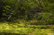 Nature Center Pond Prints - Bird By Bridge In Forest Merged Image Print by Thomas Woolworth