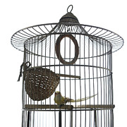 Bird Art - Bird cage by Bernard Jaubert