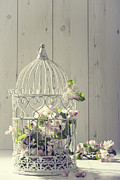 Shabby Chic Flowers Prints - Bird Cage Print by Christopher and Amanda Elwell