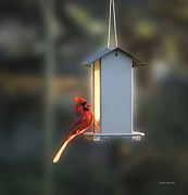 Richelieu Prints - Bird Feeder 06 Print by Thomas Woolworth