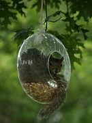 Bonita Hensley Framed Prints - Bird Feeder? Framed Print by Bonita Hensley