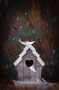 Bright Feathers Posters - Bird House Poster by Christopher Elwell and Amanda Haselock