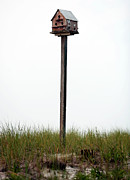 Unique Bird Posters - Bird House on Barnegat Poster by John Rizzuto