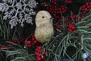 Darleen Stry - Bird in a Christmas tree