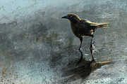 Steve Goad - Bird In A Puddle