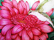 Gerbera Drawings - Bird in Bloom by Derrick Rathgeber