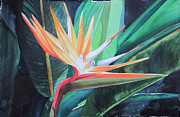 Teresa Beyer - Bird in Paradise