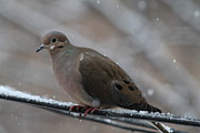Snow Photos - Bird In Snow - Animal - 011310 by DC Photographer