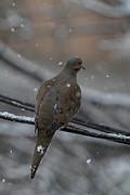 Bird In Snow - Animal - 01134 Print by DC Photographer