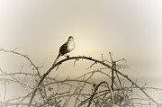 Bird In The Briar Print by Artist and Photographer Laura Wrede