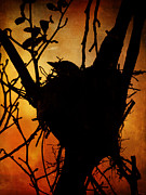 Pamela Phelps - Bird in the Nest