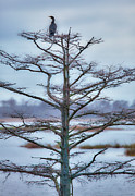 Cormorant Photos - Bird in Tree on Lake Mattamuskeet Outer Banks I by Dan Carmichael