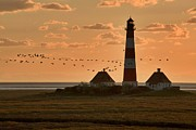 Afterglow Photos - Bird Migration at Westerhever Lighthouse  by Heiko Koehrer-Wagner