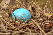 Jason Politte Prints - Bird Nest Easter Egg Basket Print by Jason Politte