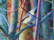 Bird On Tree Painting Prints - Bird Of Another Color Print by Debra     Vatalaro