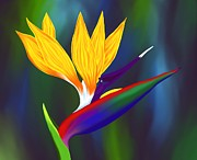 Britt Cagle - Bird of Paradise 1