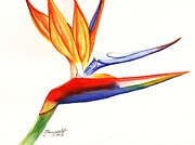 Bird Of Paradise Paintings - Bird of Paradise 4 by Marionette Taboniar