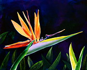 Strelitzia Painting Framed Prints - Bird of Paradise Framed Print by AnnaJo Vahle