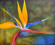 Strelitzia Painting Framed Prints - Bird of Paradise Framed Print by Darren Robinson