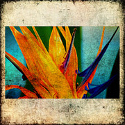 Susanne Van Hulst Prints - Bird of Paradise Flower 1 Print by Susanne Van Hulst