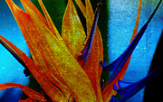 Susanne Van Hulst Prints - Bird of Paradise Flower 2 Print by Susanne Van Hulst