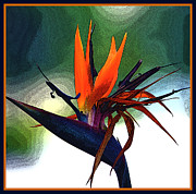Yellow Bird Of Paradise Posters - Bird of Paradise Flower Fragrance Poster by Susanne Van Hulst