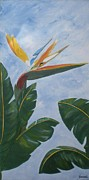 Bird Of Paradise Flower Painting Framed Prints - Bird of Paradise Framed Print by Graciela Castro