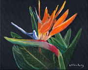 Strelitzia Painting Posters - Bird of Paradise in oil Poster by Linda Feinberg