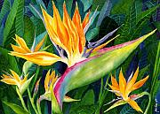 Tropical Flower Painting Posters - Bird-of-Paradise Poster by Janis Grau
